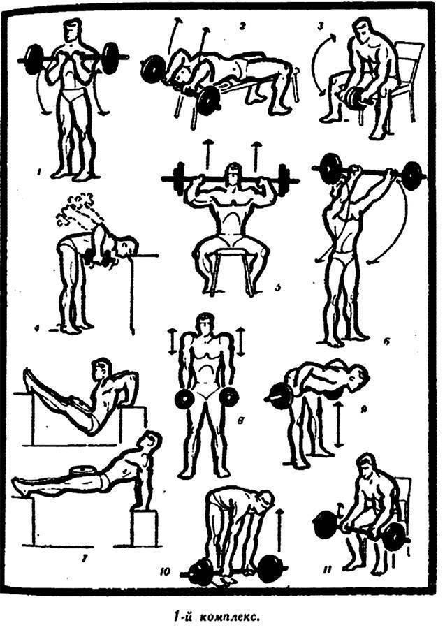 Упражнения с гантелями в домашних условиях для женщин: комплекс тренировок для похудения девушки, занятия на руки