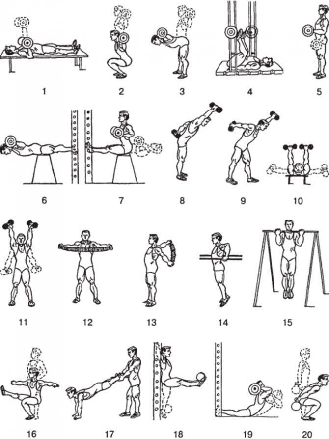 Упражнения для рук с гантелями для женщин: эффективный комплекс