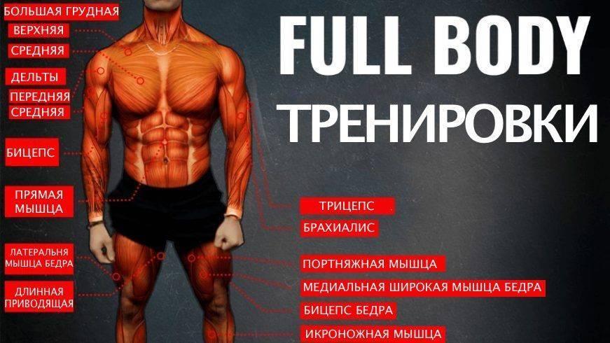 Самая эффективная программа для тренировок   experience fitness