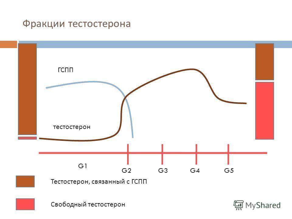 Тестостерон и сон - влияние сна на уровень тестостерона