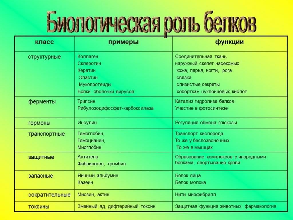 Белки — состав, свойства и роль в диете   университетская клиника