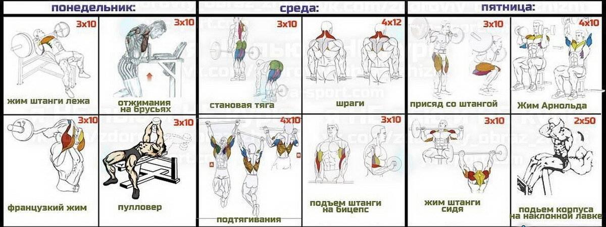 Базовые и изолирующие упражнения в бодибилдинге, список упражнений