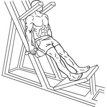 Гакк-приседания в тренажере