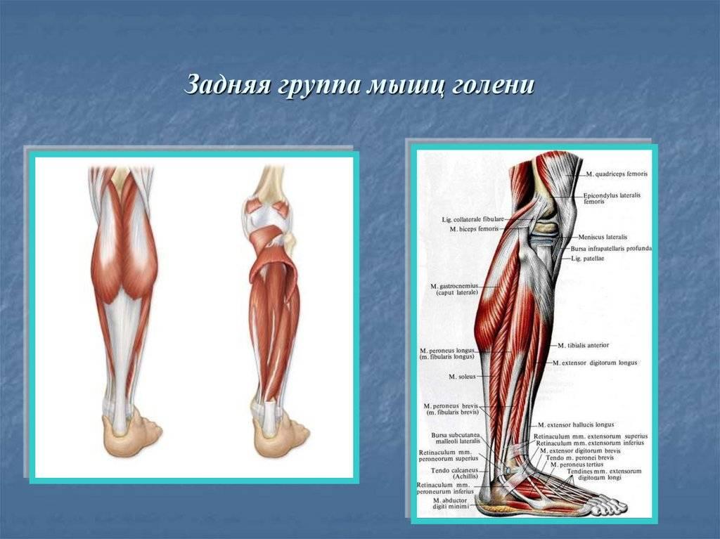 Исследование укороченных мышц » спортивный мурманск