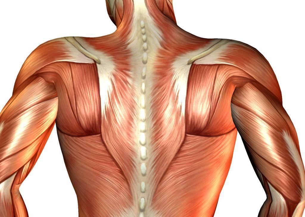 Какой врач лечит боль в спине и к какому врачу обращаться?