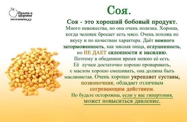 Польза и вред сои для здоровья женщин и мужчин: чем свойства такого продукта опасны для организма человека, в том числе в виде бобов, можно ли ее употреблять?