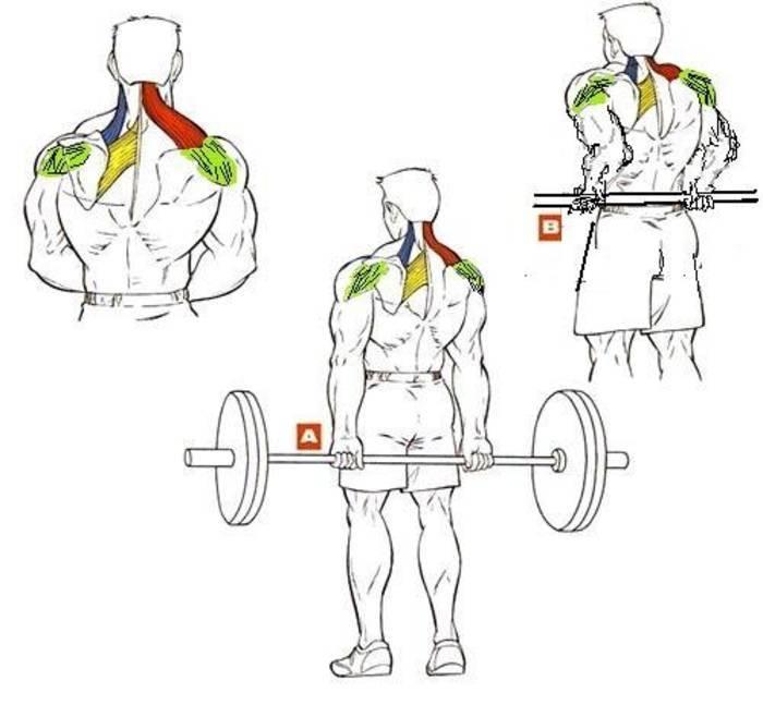 Тяга к груди в наклоне со штангой и гантелями: техника на заднюю дельту