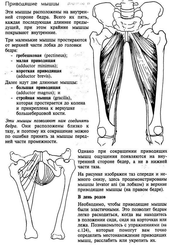 Травмы приводящей мышцы бедра » спортивный мурманск