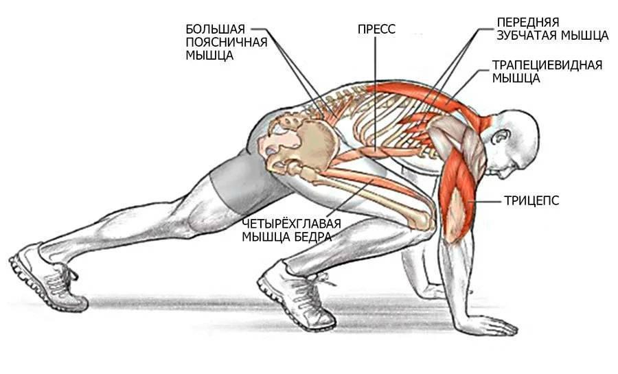 Упражнение обратная планка: как правильно делать и какие мышцы работают?