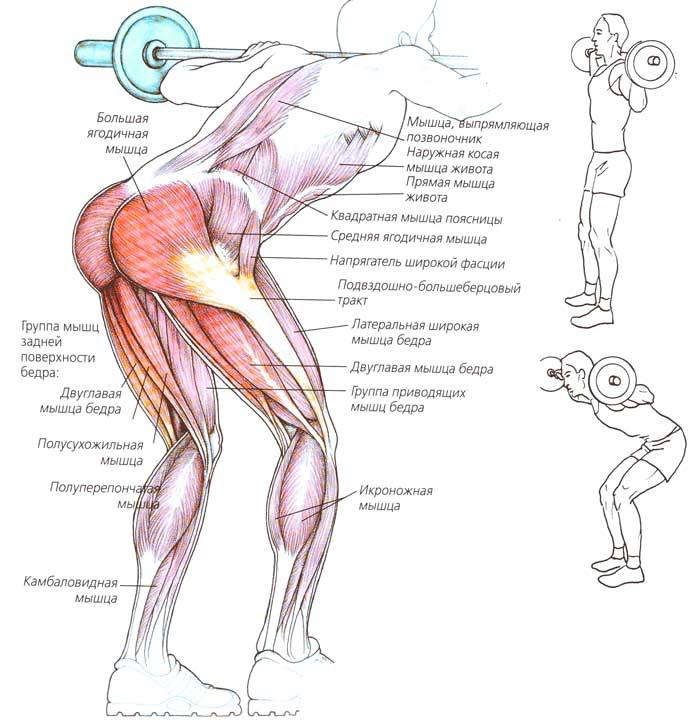 Вредные упражнения в зале: разгибания ног, боковые наклоны, жим/тяга блока из-за головы, присед в смите и другие
