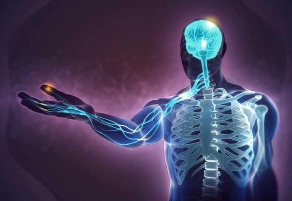 Наука мозга: интересные факты