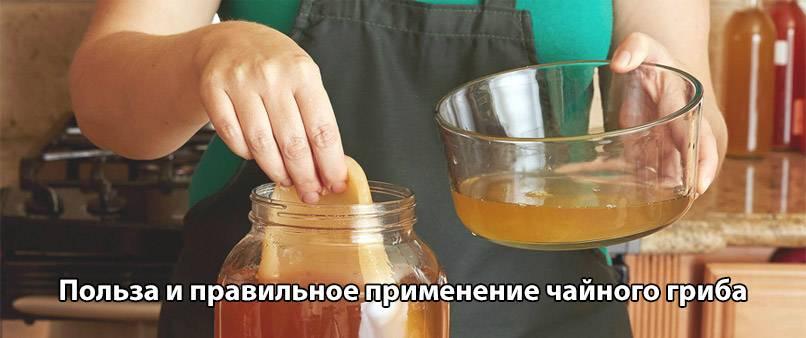 «правила эксплуатации» чайного гриба. чайный гриб — природный целитель. мифы и реальность
