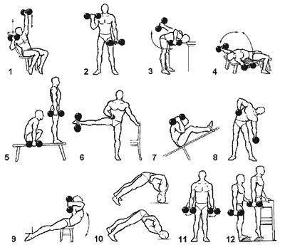 Чем полезны упражнения с гантелями для девушек