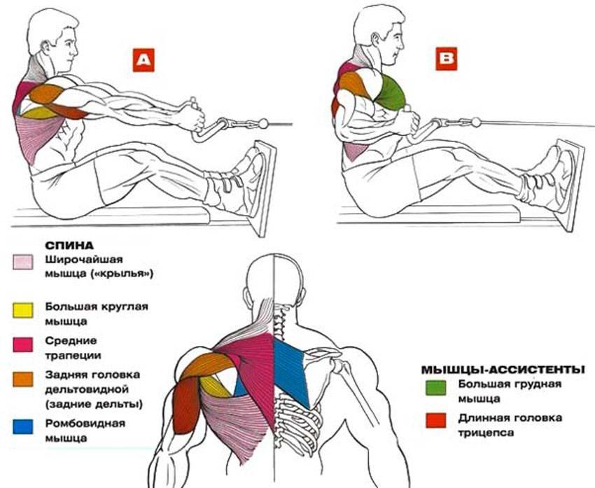 Тяга т-грифа: техника выполнения, рабочие мышцы и чем заменить