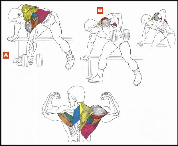 Как накачать широкую спину   бомба тело