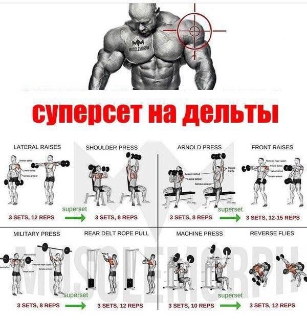 Эффективная программа тренировка грудь спина в один день