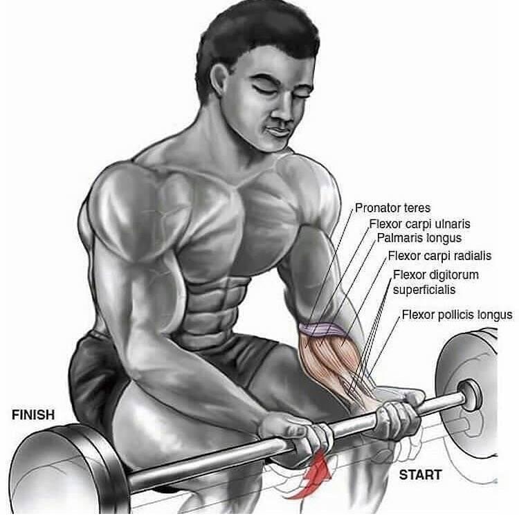 Упражнения для мышц предплечья в домашних условиях для мужчин. укрепление мышц предплечья - kak-nakachat.pro
