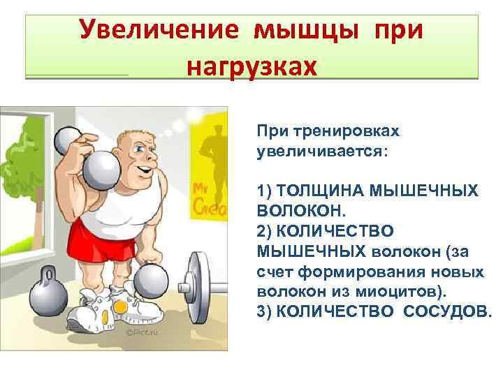 Аэробные тренировки мешают гипертрофировать мышцы