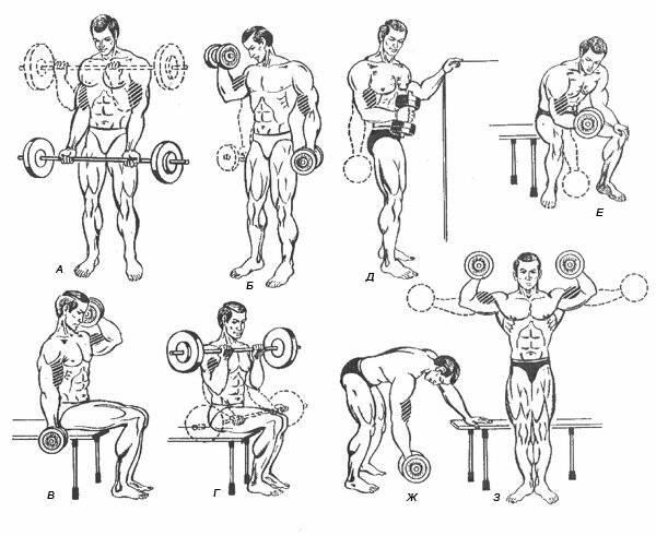 Лучшие упражнения, чтобы накачать красивые руки гантелями девушке в домашних условиях?