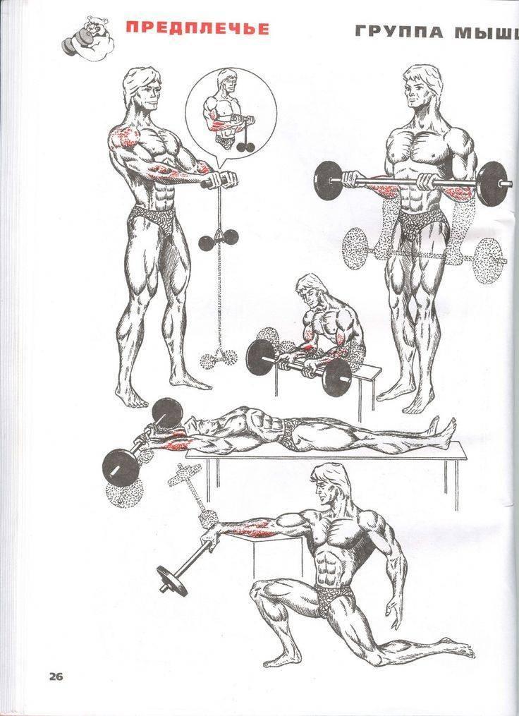 Как накачать мышцы предплечья - wikihow