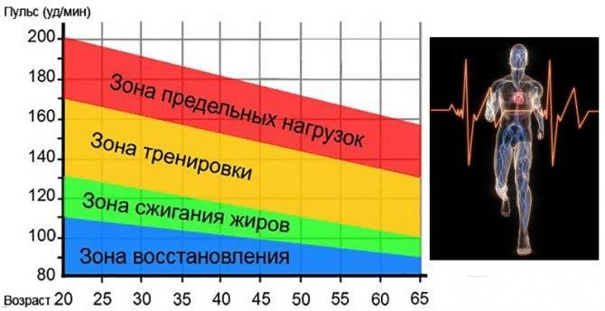 Какой должен быть пульс во время тренировки силовой и кардио
