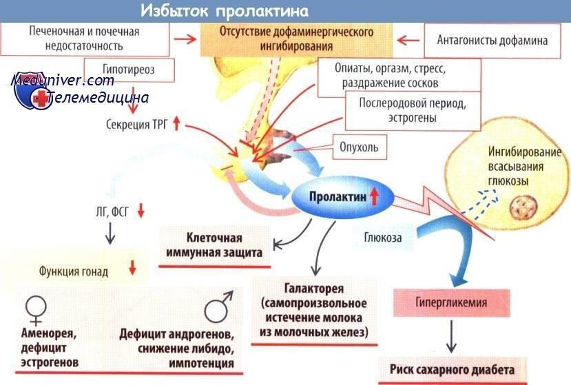 Пролактин в бодибилдинге