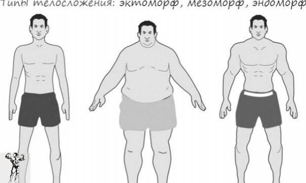 3 основных типа телосложения у женщин. найди свой - всё о женщинах - медиаплатформа миртесен