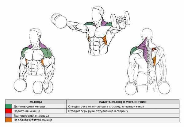 Выполняйте разведение гантелей стоя — это лучшее упражнение для плеч