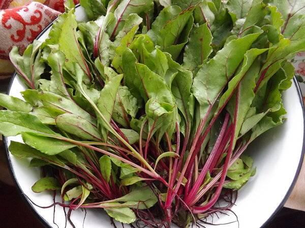 Свекольные листья рецепты блюд