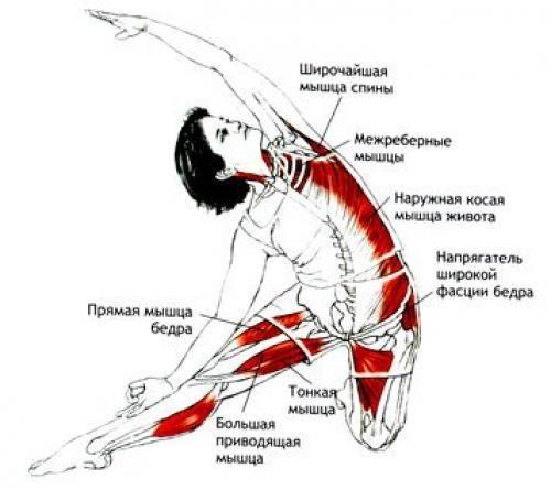 Как растягивать спину: упражнения для растяжки мышц спины и позвоночника в домашних условиях. растяжение мышцы спины: лечение и симптомы