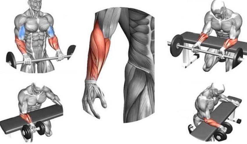 Упражнения на предплечья для женщин и мужчин в домашних условиях и в тренажёрном зале