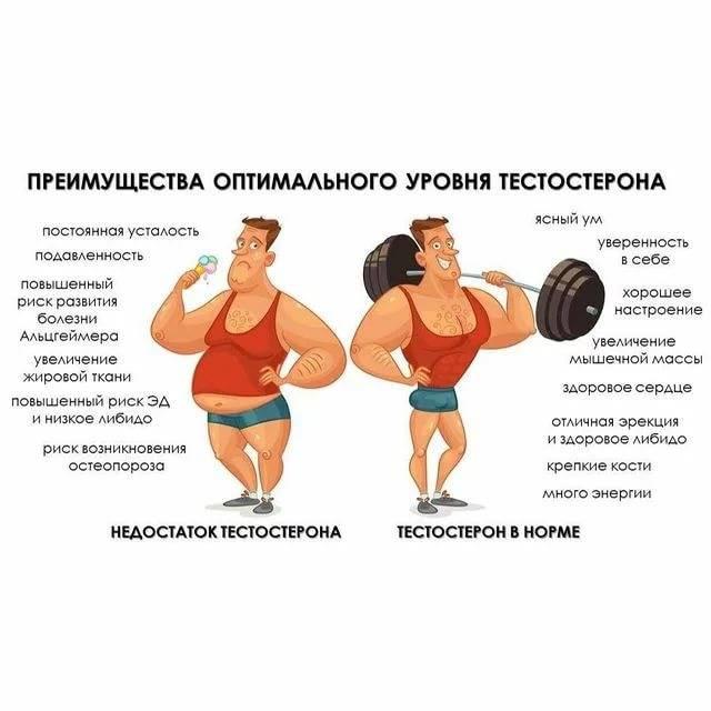 Тестостерон у мужчин: на что влияет и почему уровень бывает повышенный