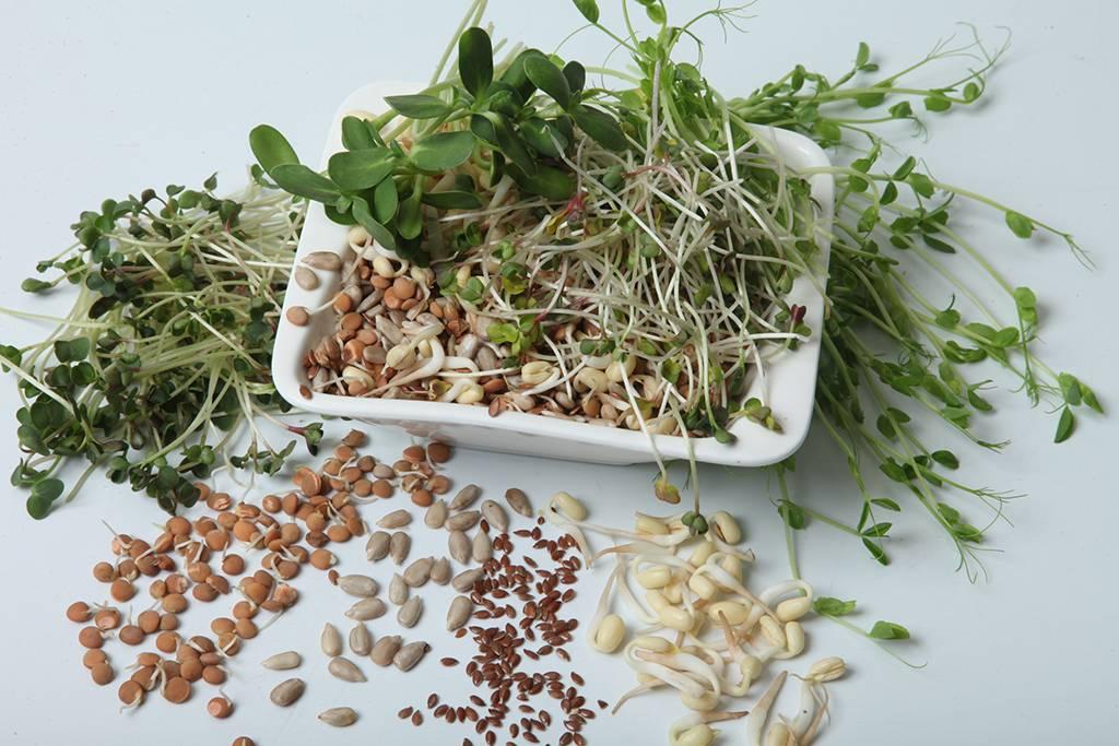 Расти зерно большое и маленькое. или как вырастить дома «живую» еду - сибирский медицинский портал