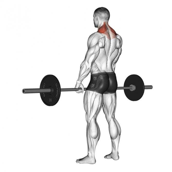 Как накачать трапецию: 6 самых эффективных упражнений и программа тренировок