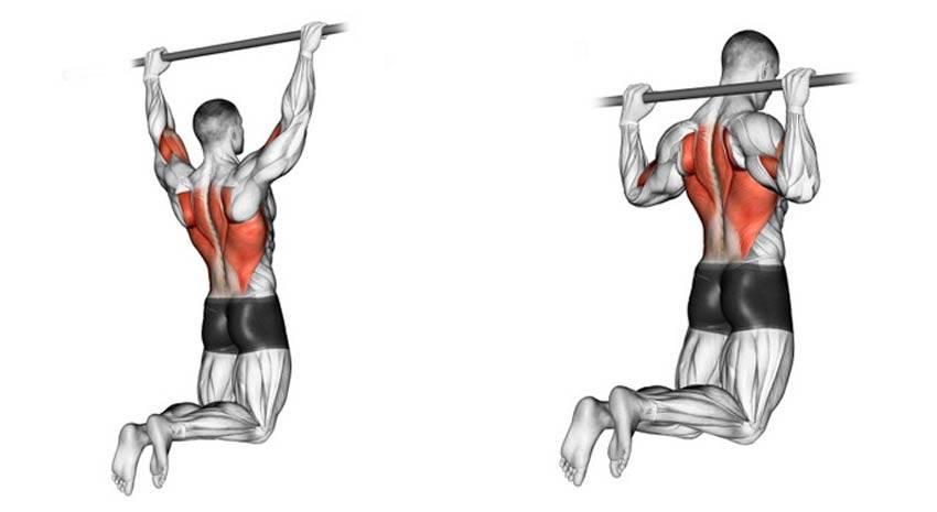 Как накачать мышцы спины. лучшие упражнения для тренировок