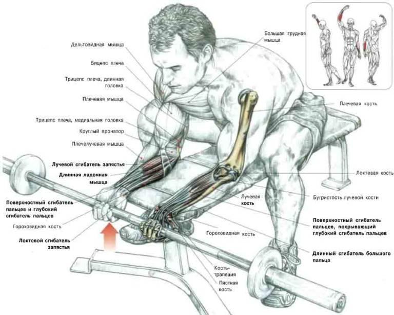 Как накачать предплечья | musclefit