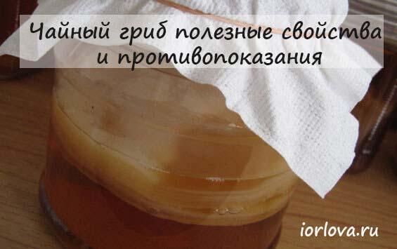 «правила эксплуатации» чайного гриба
