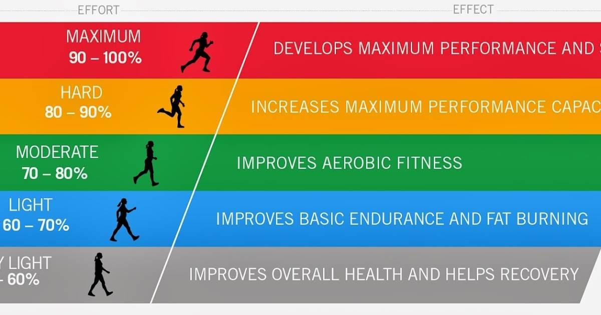 Каким должен быть пульс во время тренировки | musclefit