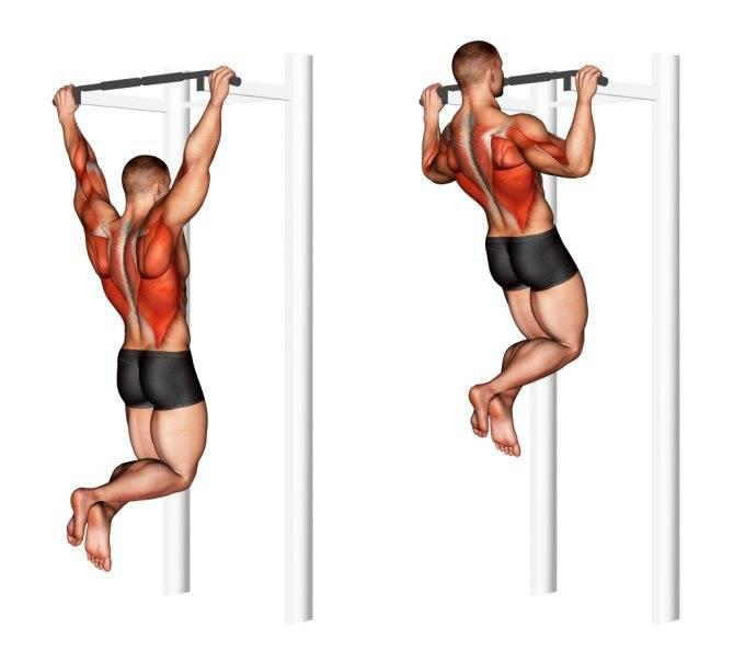 Как накачать спину на турнике: техника подтягиваний, программа тренировок для широкой спины