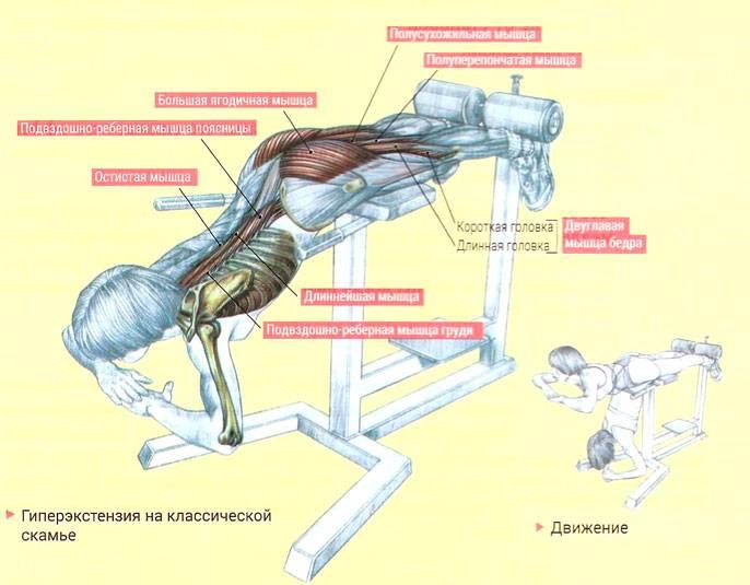 Гиперэкстензия — упражнение для укрепления спины