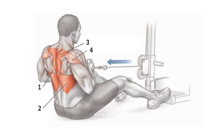 Упражнения на растяжку для начинающих в домашних условиях и после тренировок, фото, комплексы, видео