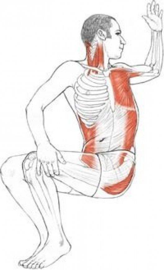 Упражнения для растяжки мышц: подробное описание | бомба тело
