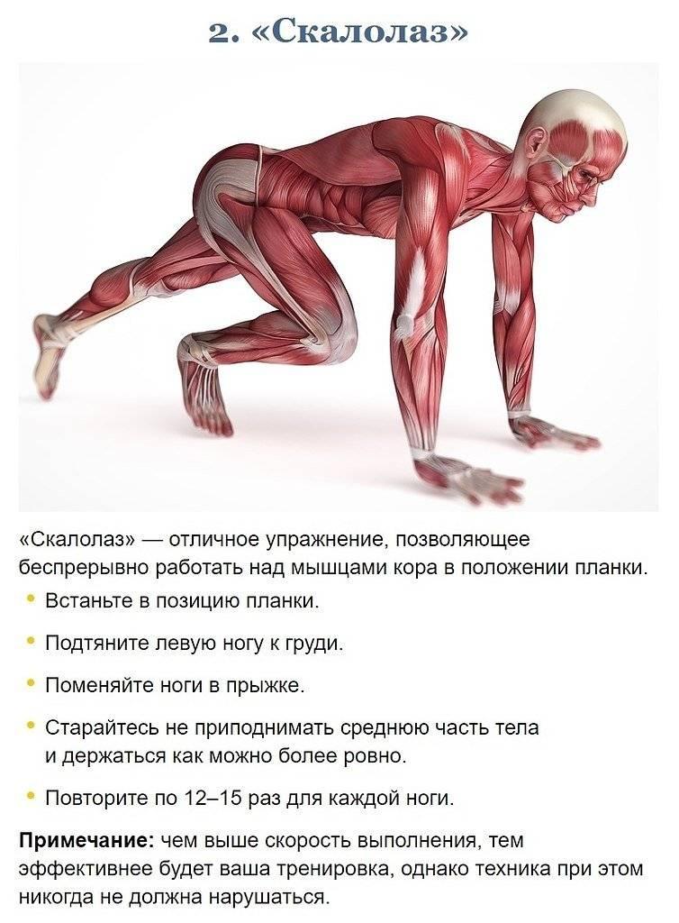 Мышцы кора: что это такое, где находятся, упражнения