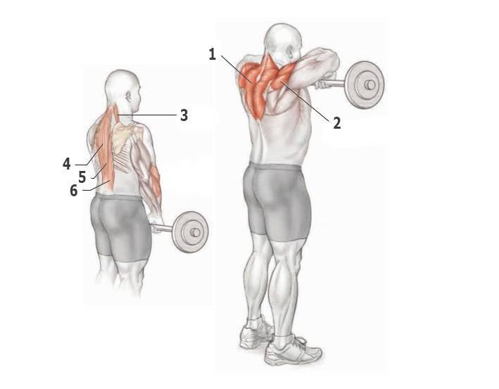 Шраги со штангой. упражнение для трапеций и для здоровья