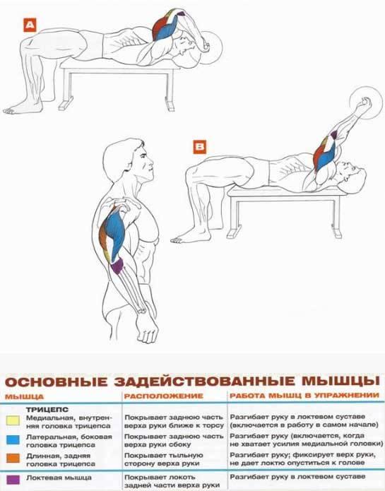 Как накачать трицепс. популярные упражнения и рекомендации