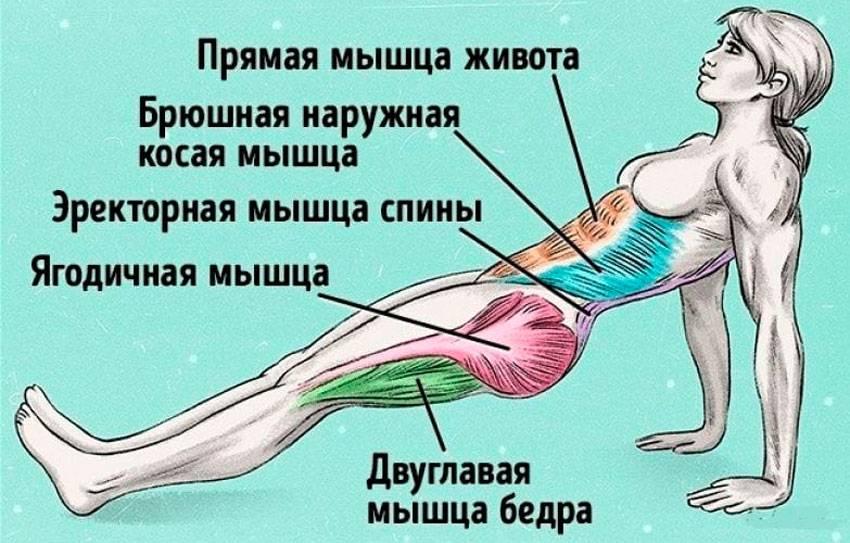 """Упражнение """"обратная планка"""": особенности выполнения, польза, возможные ошибки - tony.ru"""