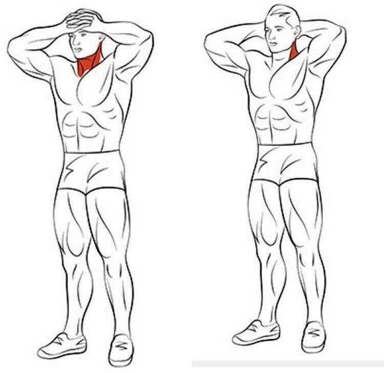 Как правильно и быстро накачать шею в домашних условиях