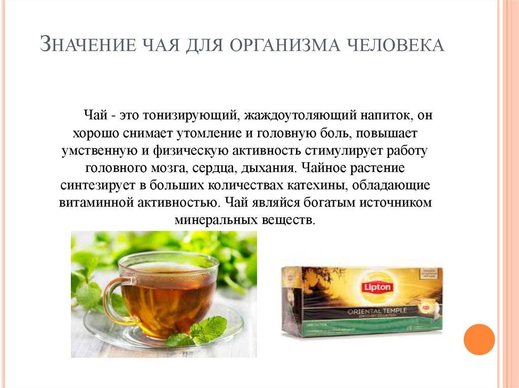 Зеленый чай: опровержение 8 популярных мифов о пользе с доказательствами