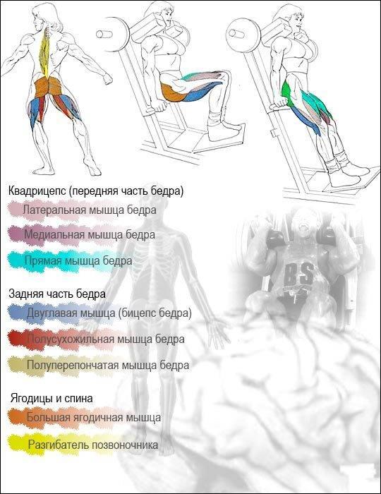Гакк-приседания в машине гаккеншмидта: техника выполнения упражнения, плюсы и минусы