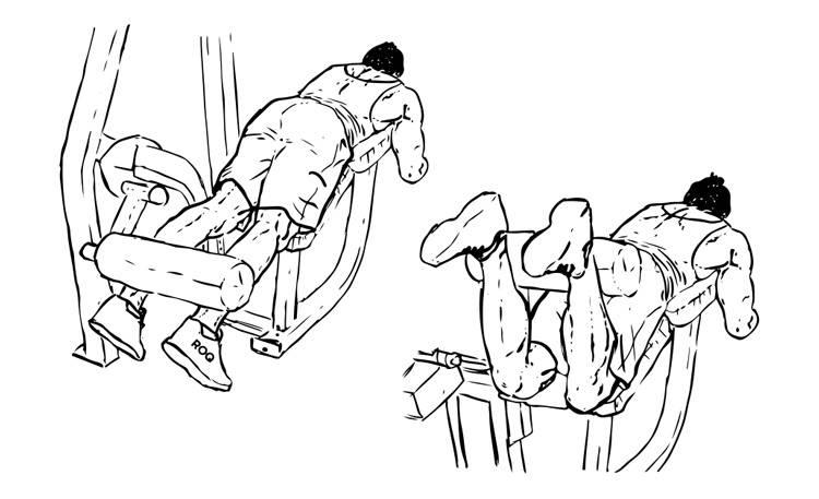 Сгибание ног лежа в тренажере